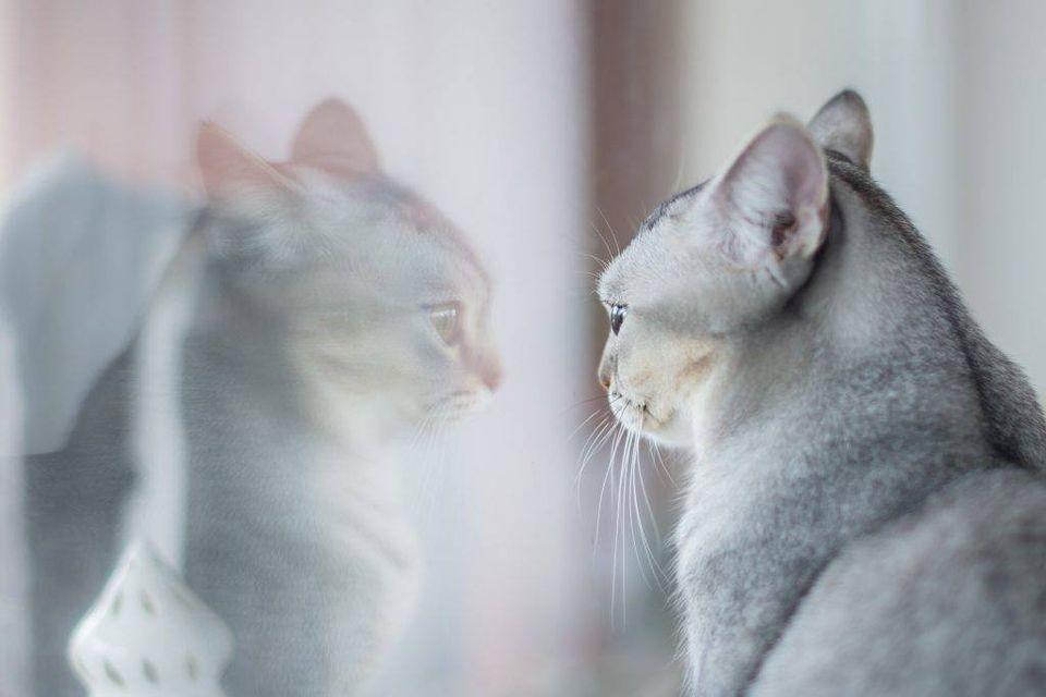 effet miroir