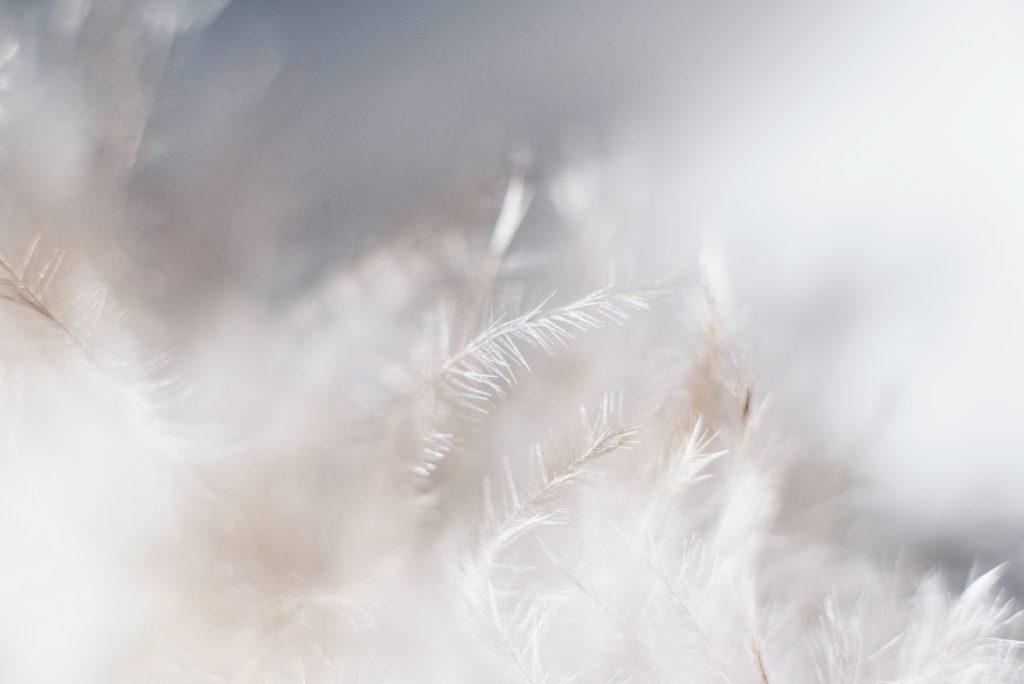 symbolique plumes message anges